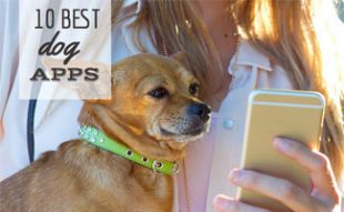 10 best dog apps