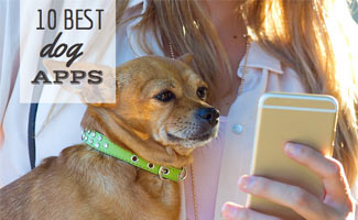 10 best dog apps: Chihuahua dog looking at smartphone