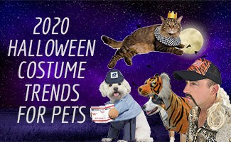 Dogs, Cats, & Man in halloween costumes (caption: 2020 Pet Halloween Costume Trends For Pets