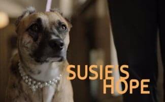 Susies Hope