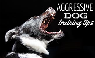 Dog barking (caption: Aggressive dog training tips)