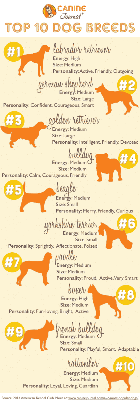 AKC Most Popular Breeds Infographic