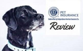 Black lab (caption: AKC Pet Insurance Review)