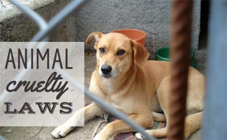 Animal Cruelty Laws