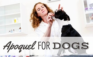Female vet giving pill to dog (caption: Apoquel For Dogs)