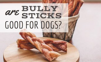 Bully sticks: Are Bully Sticks Good for Dogs?