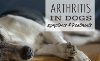 Dog laying down (caption: Arthritis In Dogs)