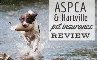 Dog running in water with stick in mouth (caption: ASPCA & Hartville Pet Insurance Reviews)