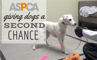 Rescue Dog: ASPCA Giving Dogs a Second Chance