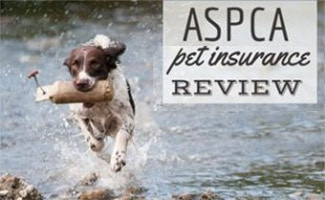 Dog running in water with stick (caption: ASPCA Pet Insurance Review)