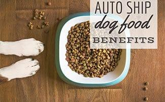 Dog sitting on ground with dog food bowl (caption: Auto Ship Dog Food Benefits)