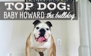 Baby Howard the Bulldog at top of stairs
