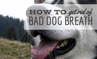 How to Get Rid of Bad Dog Breath: dog breathing