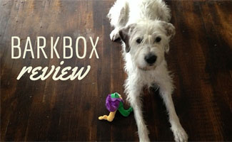 Dog laying on the floor with a toy (Caption: BarkBox Review)