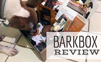 Dog with BarkBox (caption: BarkBox Review)