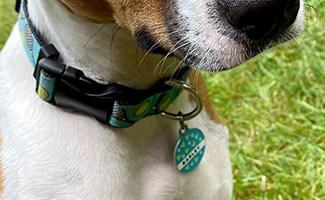 Barley Dog ID Tag from Shutterfly