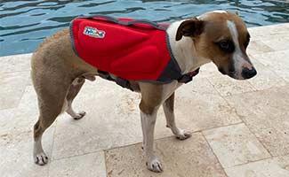 Barley in life jacket at pool