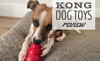 Barley with dog toy (caption: Kong Dog Toys Review)