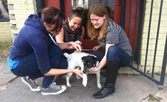 Baxter the blind dog outside Blind Dog Cafe