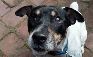 Baxter the blind dog