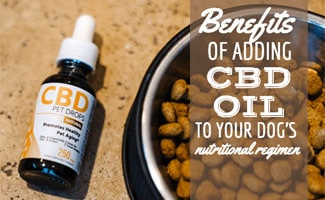 CBD oil next to bowl of dog food (caption: Benefits Of Adding CBD Oil To Your Dog's Nutritional Regimen)