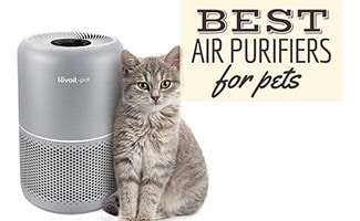 Cat sitting next to air purifier (caption: Best Air Purifier For Pets)