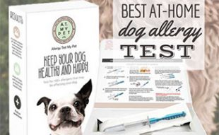Dog allergy test (caption: Best At-Home Dog Allergy Test Kits)