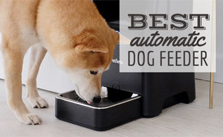 Dog eating out of PetNet auto dog feeder