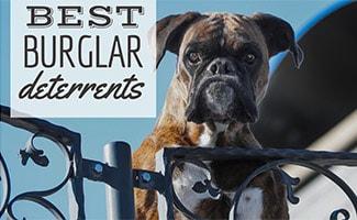 Guard dog looking over gate (caption: Best Burglar Deterrents)