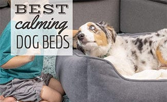 Dog sleeping in bed with kid next to him (Caption: Best Calming Dog Bed)