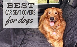 Best Car Seat Covers For Dogs Just Say No To Canine Crud