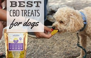 Dog eating CBD treat (caption: best CBD Treats for dogs)