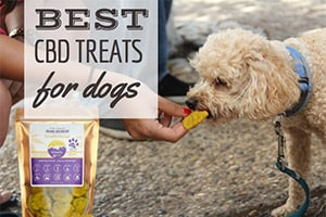 Best CBD Dog Treats: An Easy Alternative To CBD Oils