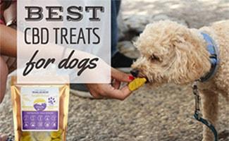 Dog eating CBD Treat (caption: Best CBD Treats for dogs)