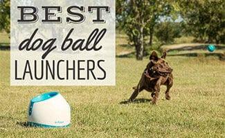 Dog chasing ball in field (Caption: Best Dog Ball Launchers)