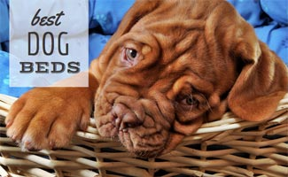 Dont Let Sleeping Dogs Lie Choosing The Best Dog Bed