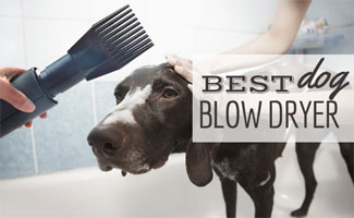 Dog getting bathed with blow dryer in woman's hand