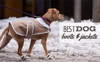 Dog in snow: Best Dog Boots and Coats for Winter