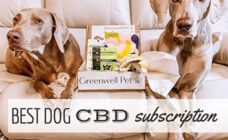 Two dogs with CBD Box subscription between them (caption: Best dog CBD subscription)
