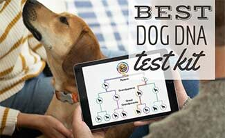 Dog with DNA test results on iPad (Caption: Best Dog DNA Test Kit)