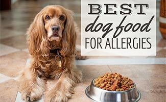 Cocker spaniel sitting next to bowl of dog food (Caption: Best Dog Food For Allergies)