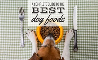 Dog eating food out of bowl with silverware (caption: A Complete Guide To The Best Dog Foods)