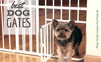 Dog walking through gate (caption:Best Dog Gates)