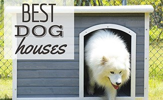 Dog walking out of dog house (caption: Best Dog Houses)