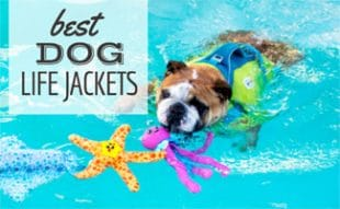 Dog swimming in pool with life jacket