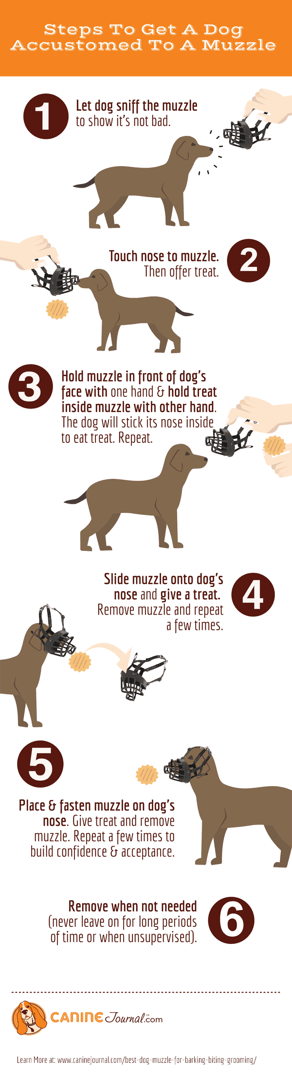 Steps To Get A Dog Accustomed To A Muzzle Infographic