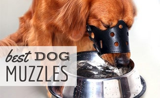 Dog with muzzle on eating out of bowl (caption: best dog muzzles)