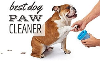 Dog using MudBuster (caption: Best Dog Paw Cleaner)