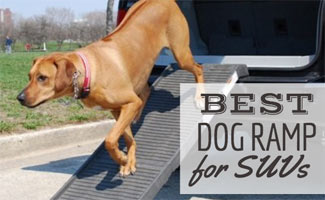 Dog going down ramp off trunk of SUV (caption: Best Dog Ramp For SUVs)