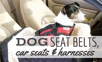 Dog sitting in front seat in car harness